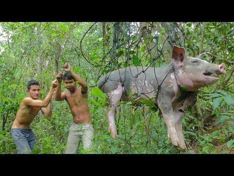 Primitive Technology: Build Pig Trap and Roasted Big Pig Eating Delicious. ▻ More videos: Cooking Technique: Cooking Yummy Pork Rips | Fried Pork Rips ...
